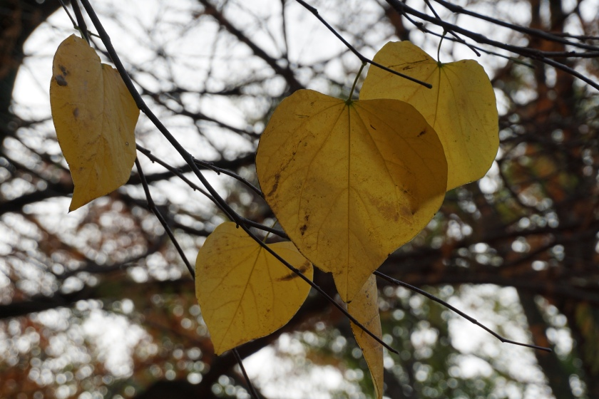 an image of yellow leaves in front of bare black branches